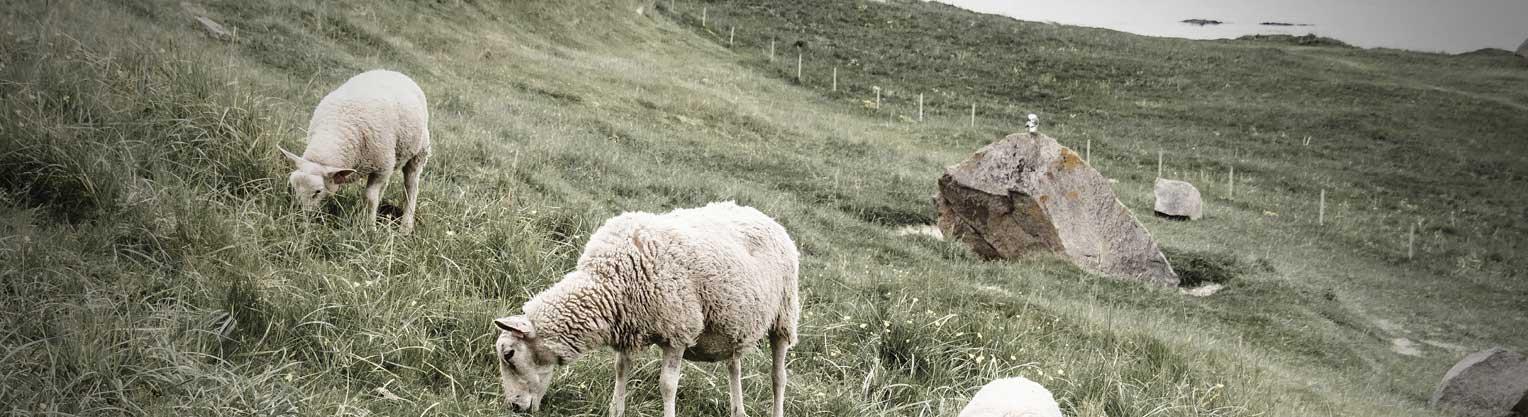 Lammfleisch kaufen bei Don Carne