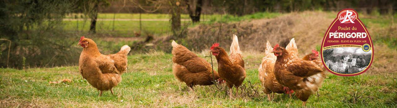Französisches Maishähnchen online bestellen ✔ Chicken Wings, Hähnchenbrust, Hähnchenkeule, ganzes Hähnchen ✔ Freilandhaltung ➨ Garantiert gekühlte Lieferung